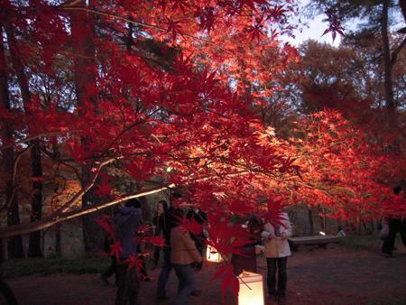 森林公園03.jpg
