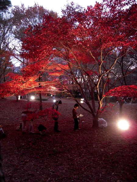 森林公園10.jpg