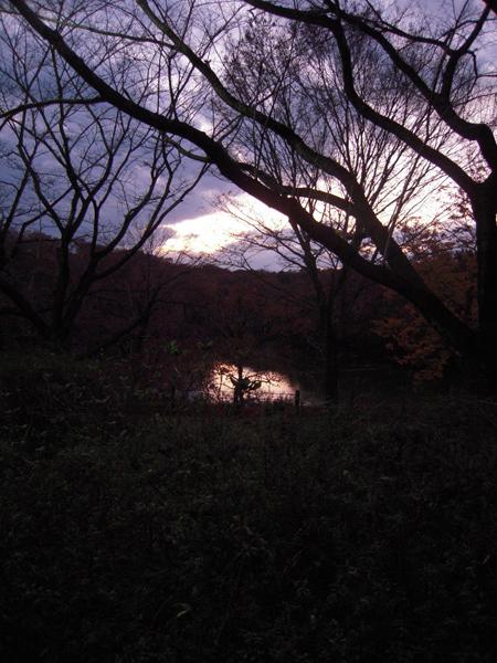 森林公園30.jpg