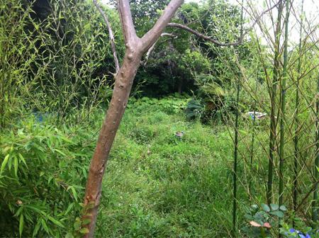 葉山草刈り01.JPG