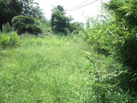 葉山草刈り05.JPG
