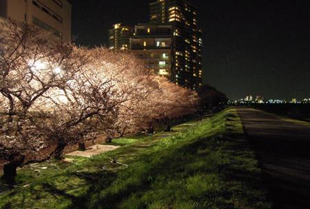 桜014.jpg