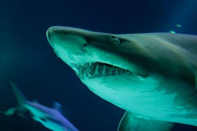 鮫.jpg